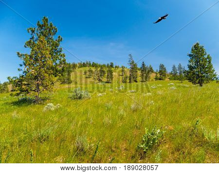 Mountain landscape with Bald Eagle soaring above