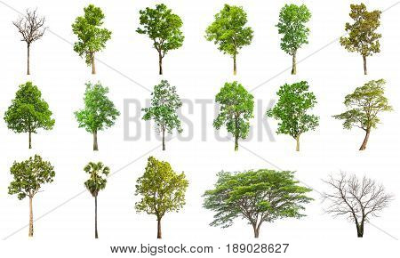 Isolated Tree On White Background, Collections Tree Isolated On White Background
