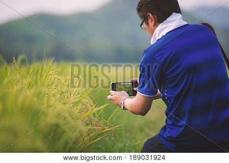 Man using smart phone taking photo of rice field