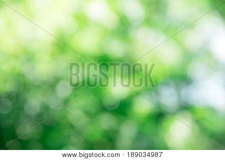 green bokeh background,green bokeh,green bokeh abstract