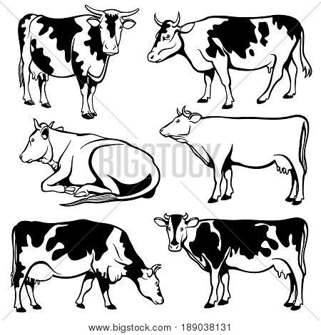 Black and white cows vector set. Farm cow illustration, cattle black silhouette
