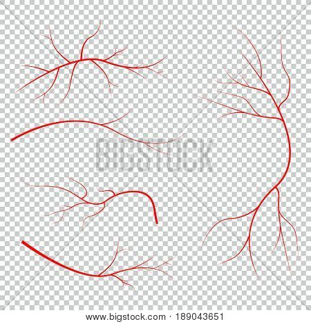 Human blood veins, red vessels on black background