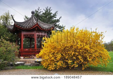Berlin, Germany - April 13, 2017: Chinese gazebo in the Gardens of the World in Berlin and blooming yellow bush. Germany in spring.