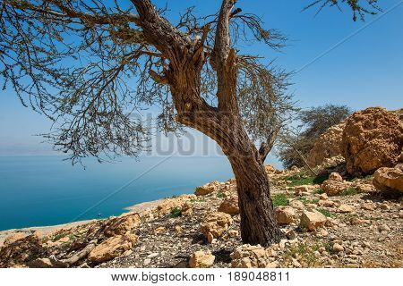 En Gedi Desert Oasis On The Western Shore Of The Dead Sea In Israel