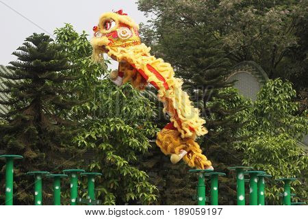 yellow chinese Traditional lion dancing performance in new year celebration festival at Chinatown