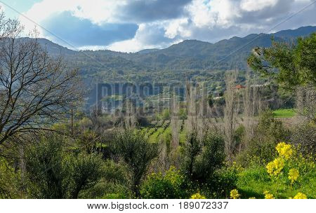 Troodos Mountain Cyprus and the cultivated valley with vines in Spring.