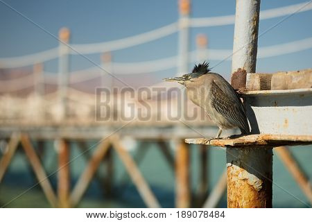 Bird hides from strong wind on a wooden pier in sea. View at the resort for trips during summer vacation. Summer vacation on Red sea. View at a clear sea with turquoise water in windless conditions. Summer vacation at a sea coastline in an exotic country.