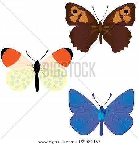 Collection of three common butterflies; Maniola Jurtina; Anthocharis Cardamines; Polyommatus icarus