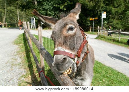 Funny Donkey Eating A Pice Of Wood