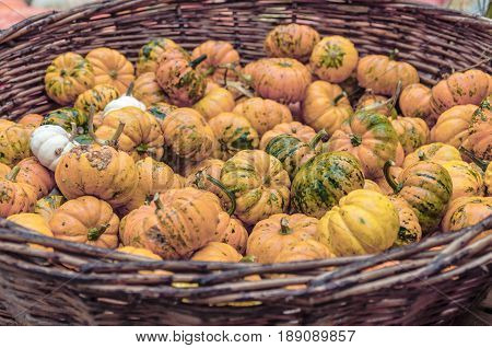 A lot of yellow different autumnal pumpkins in basket