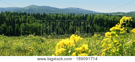 Nature of east kazakhstan. Coniferous forest green meadow with flowers mountains blue sky. Idyllic summer panorama.