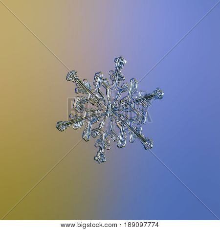 Real snowflake macro photo: medium size snow crystal of stellar dendrite type with glossy, relief surface and six elegant arms, glittering on smooth yellow - blue gradient background.