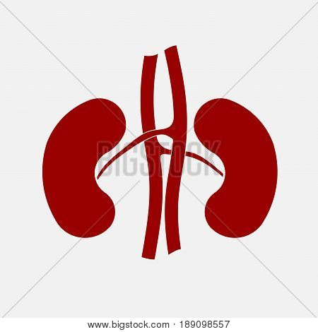 icon human kidney anatomy organs fully editable vector image