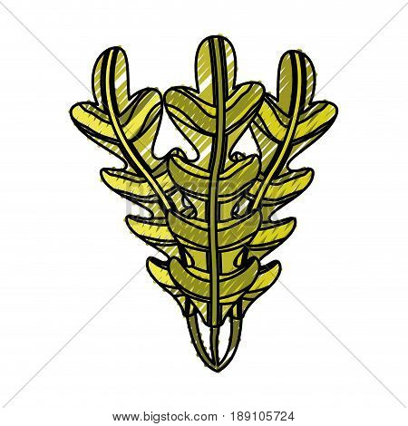 isolated seaweed ocean life vector illustration graphic design