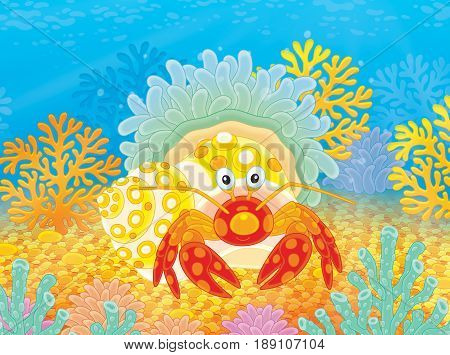 Illustration of a small diogenes-crab with an actinia