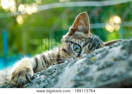 Close up young cute kitten hides with gree trees in background