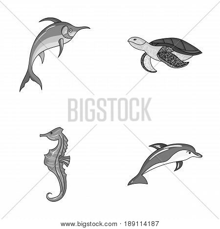 Merlin, turtle and other species.Sea animals set collection icons in monochrome style vector symbol stock illustration .