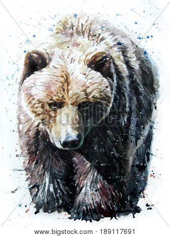 Bear watercolor animals predator wildlife art grizzly