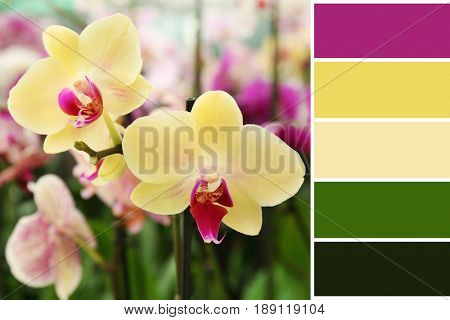 Lilac color matching palette. Beautiful flowers, closeup