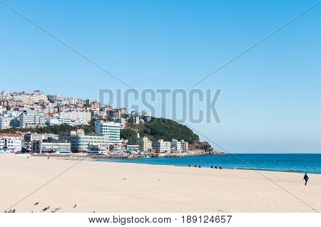 BUSAN SOUTH KOREA - NOV 01: Haeundae Beach many pigeons and people were at the famous and beautiful beach with contrast scene between nature and city on November 01 2016 in Busan South Korea