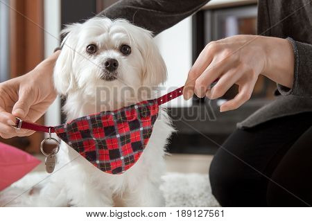 Woman Is Wearing A Dog Collar With An Identifier