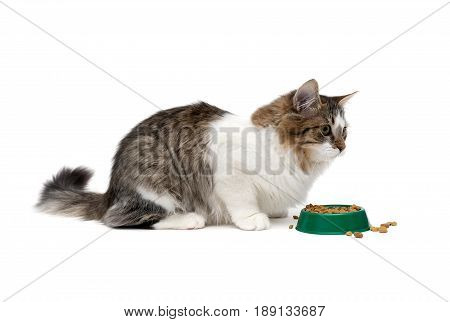 Fluffy cat sitting near a bowl with food on a white background. Horizontal photo.