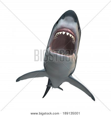 3D Rendering Great White Shark On White