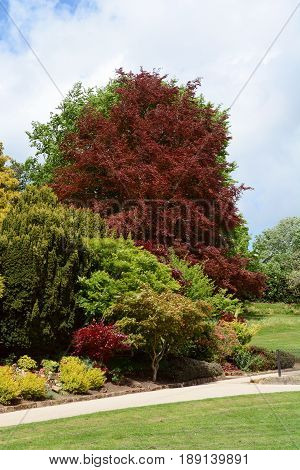 Lush Green And Red Foliage Of Trees And Shrubs In Calverley Grounds