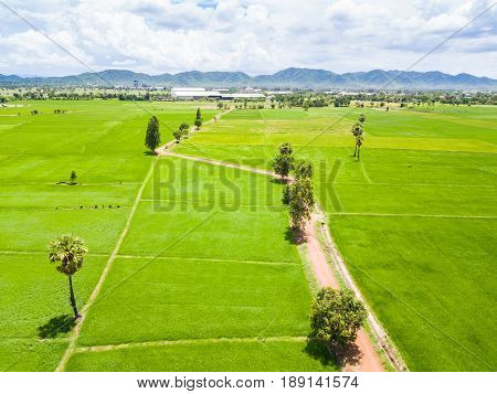 Rice Paddy And Dirt Road