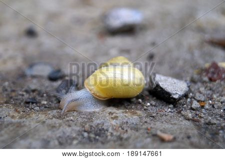 A snail with a shell crawls on the ground on a summer day