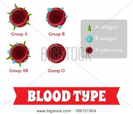 Blood group. Blood type. Vector illustration in flat style
