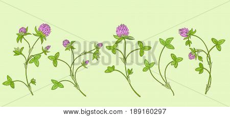 Blooming red clover (Trifolium pratense). Pink meadow flowers in spring. Elements are organized by groups.