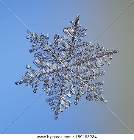 Real snowflake macro photo: very big fernlike dendrite snow crystal with six long, massive arms, complex structure and lots of side branches. Snowflake glittering on light blue - gray background.