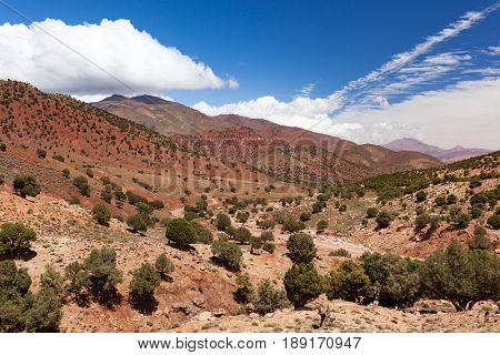 Morocco, High Atlas Landscape. Argan trees on the road to Ouarzazate.Spingtime, sunny day. Africa.