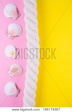 Sea Rope And Scallop Shells On Colored Backgrounds With Negative Space