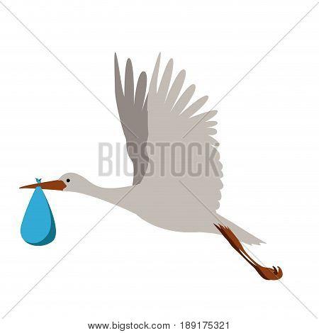 Isolated Stork Bird