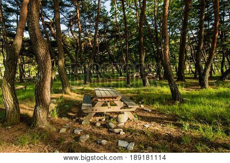 Single picnic table surrounded by rocks and small boulders in a picnic area in a grove of evergreen trees.