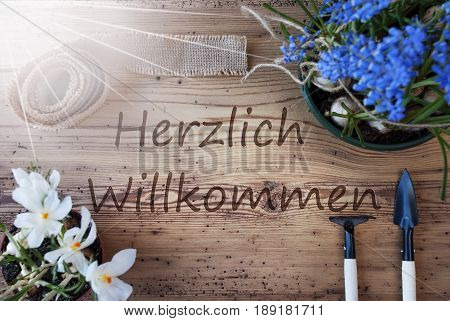 German Text Herzlich Willkommen Means Welcome. Sunny Spring Flowers Like Grape Hyacinth And Crocus. Gardening Tools Like Rake And Shovel. Hemp Fabric Ribbon. Aged Wooden Background