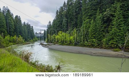 Small Creek in the Redwood Forest - REDWOOD FOREST