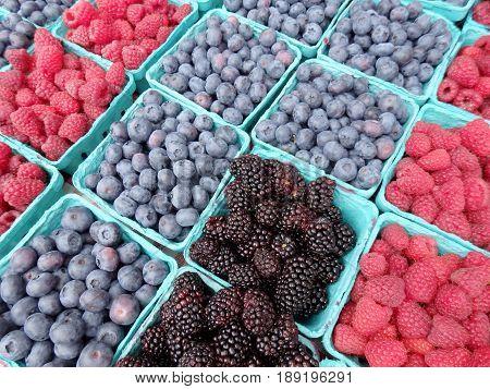 Raspberries blue berries and black berries in blue boxes at farmers market.
