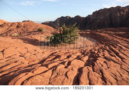 Lone green shrub among red rock of petrified sand dunes in Southern Utah