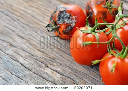 Rotten group of tomato on old wood background selective and soft focus