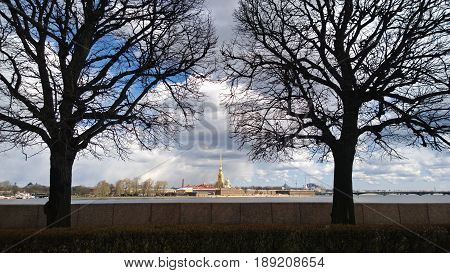 View from Vasilevsky island on the far Petropavlovskiy Cathedral in St. Petersburg with two trees in the foreground