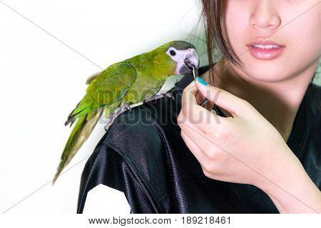 Cute green macaw bird pet on shoulder woman is feeding bird pet.