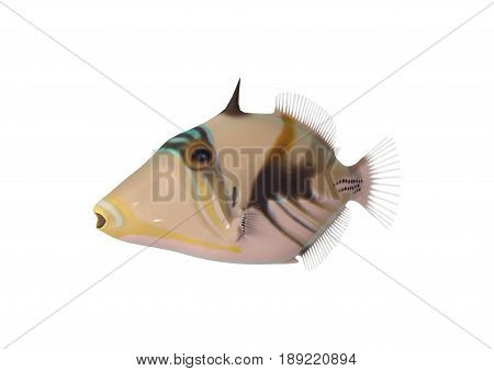 3D Rendering Reef Triggerfish On White