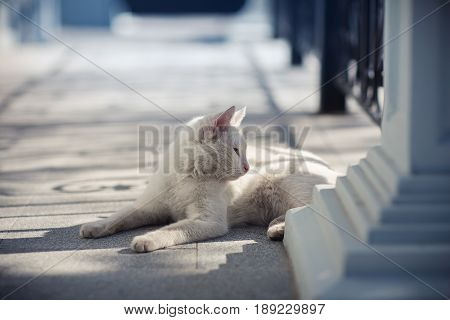 White cat lying on the porch on a sunny day