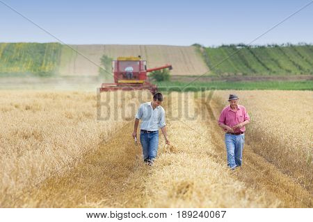 Farmers In Wheat Field During Harvest