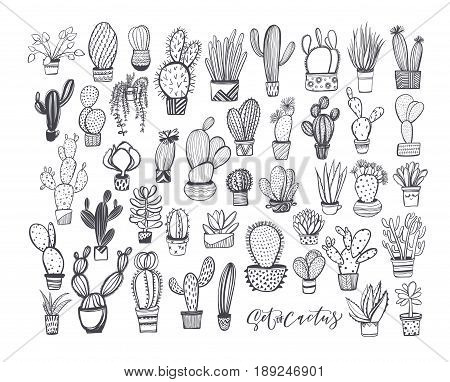 Collection of cactus. Plants in a pots. Nature elements. Ink illustration. Hand drawn ornament for wrapping paper.