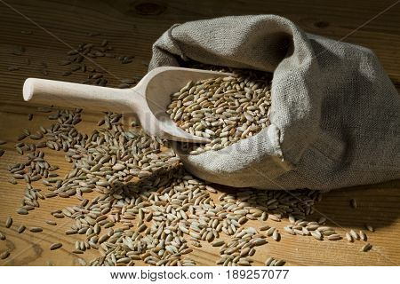 cereal grains of rye