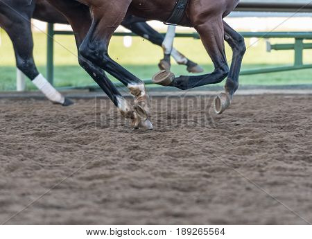 Hooves Pound the Dirt during morning practice